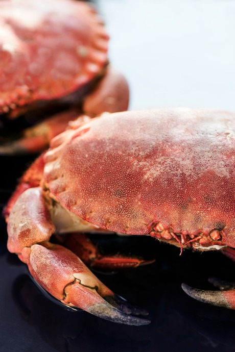 How to Cook Crabs: All Dungeness crabs are large, since only adult males are kept and sold. In fact, their average weight is around two pounds.