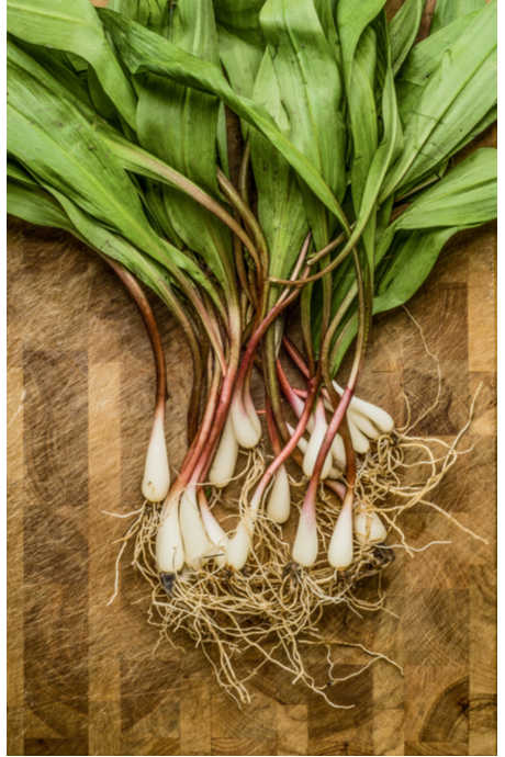 Types of Onions: look for ramps on restaurant menus or possibly at farmer's markets starting in late winter. Ramps are only in season briefly, and they don't last long.